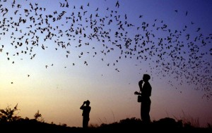 Bat Flight at Carlsbad Caverns