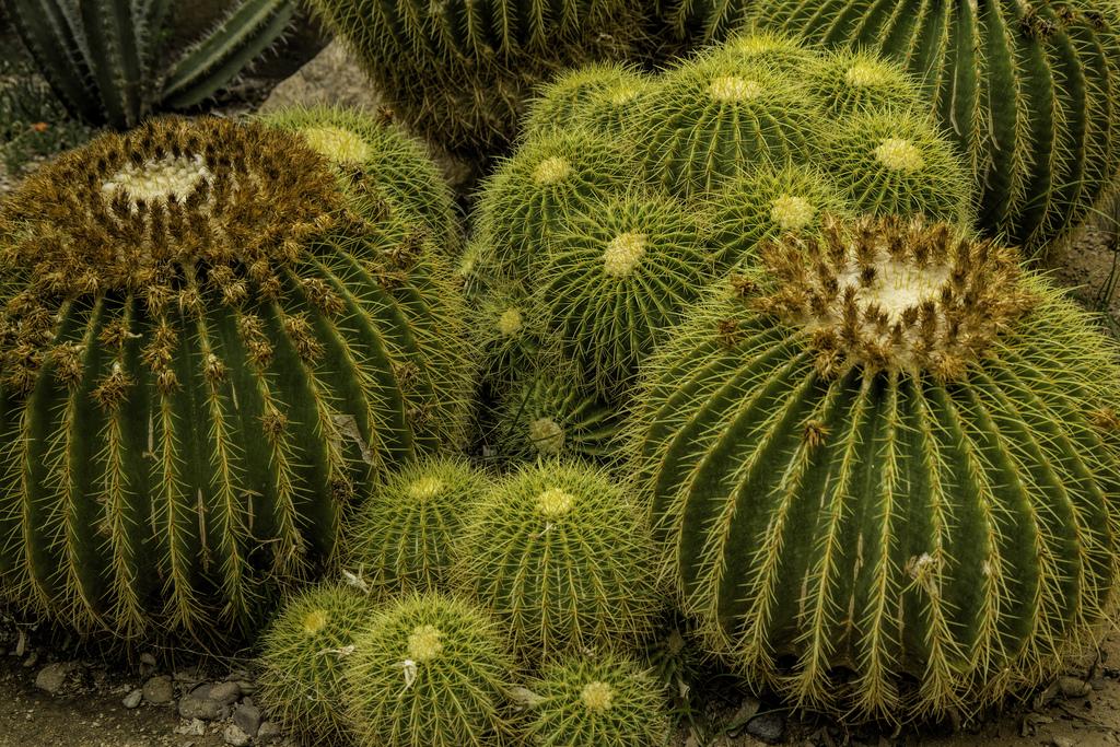 Carlsbad New Mexico - Cactus Bundle